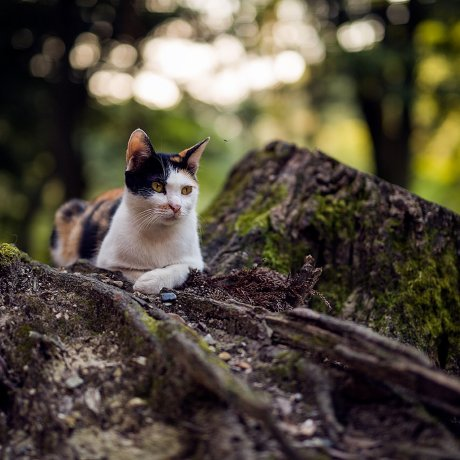 The Cats of Fushimi Inari Taisha